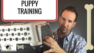 Dog Kennel Training Vs Crate Vs Do I Worry About It?  [Part 1]