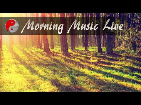 🔴 Morning Music Instrumental: Relaxing Live Stream Music Playlist, Royalty Free Background Music ❤❤