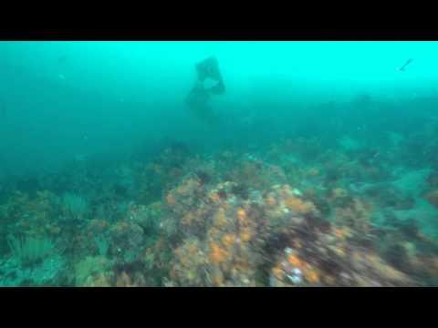 Plongée Dérivante - Drift Diving - Golfe du Morbihan