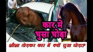 गर्मी से चकराया घोड़े का सिर, चलती कार में लगाई छलांग | Horse rams into car in Jaipur|