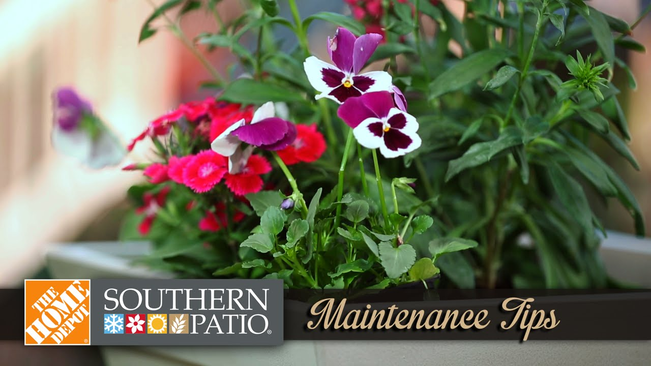 VIDEO: Container Gardening Maintenance Tips | Southern Patio