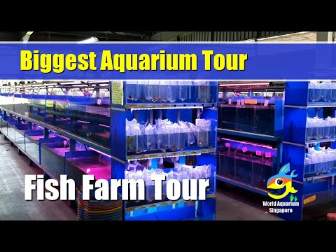 Biggest Aquarium Shop - Nanyang Trading Aquarium Fish Farm Tour Part1
