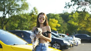 Car Community Comes Together To Help Rescue Dogs  | Localish