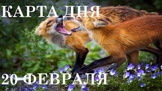 КАРТА ДНЯ 20 ФЕВРАЛЯ ТАРО ГОРОСКОП