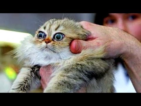 You'll NEVER STOP LAUGHING after THIS – Awesome CATS, DOGS and other ANIMALS COMPILATION