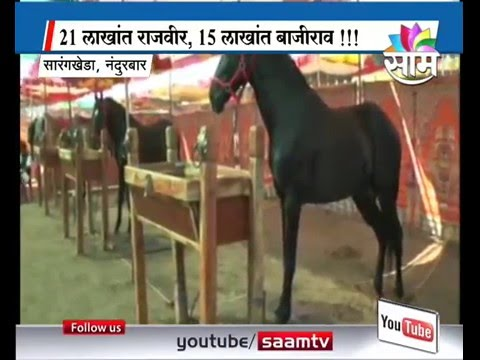 Horse sold at price of Pajero at Sarangkheda, Nandurbar