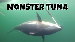 MONSTER TUNA - Giant Bluefin caught in record time in PEI