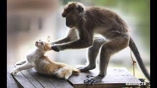 Лучшие приколы с животными 2018. Смешные видео про животных.