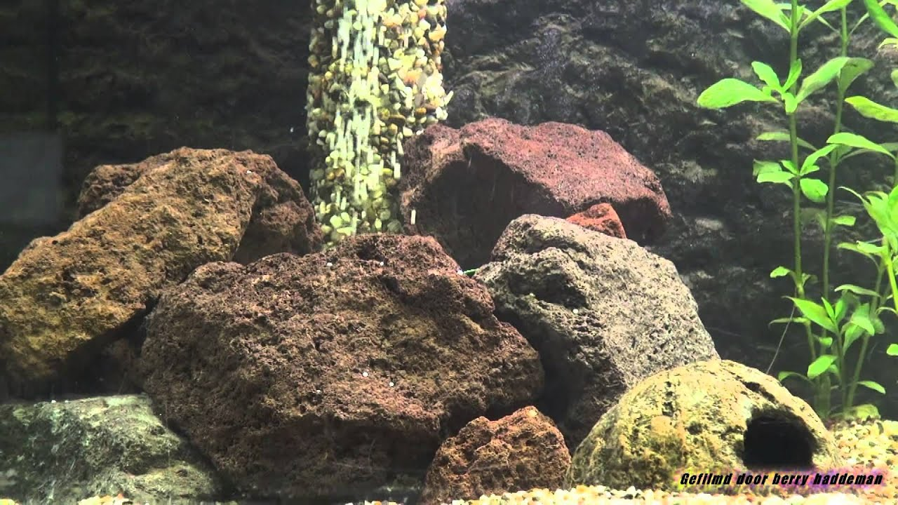 Sand waterfall in my aquarium zand waterval in mijn for Aquarium waterfall decoration