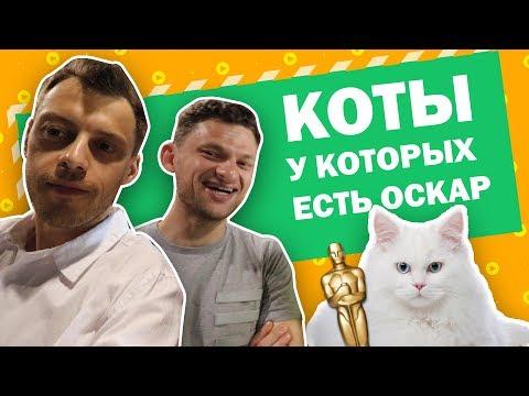 Сколько нужно дублеров кота для 1 рекламного ролика? Реклама банка Koto