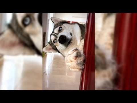 Cutest dog in the world |  Cute and Funny Dog Videos Part 7