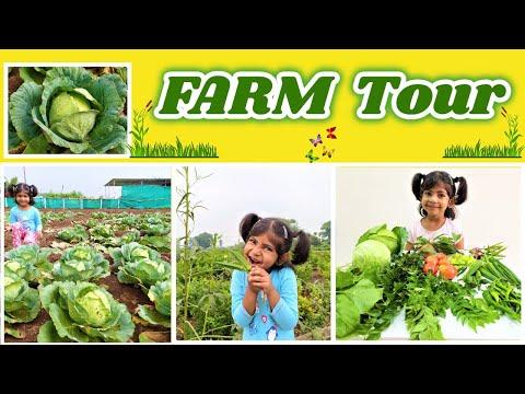 Organic Farm Tour in Pune | Organic Vegetable picking with Kids | Pune Telugu vlog