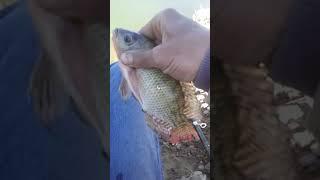 صيد السمك من النوباريه ١٠ \٤\٢٠١٩     رجاء اشترك وادعم القناه