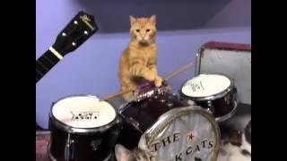 Waldo kitty drummer vine
