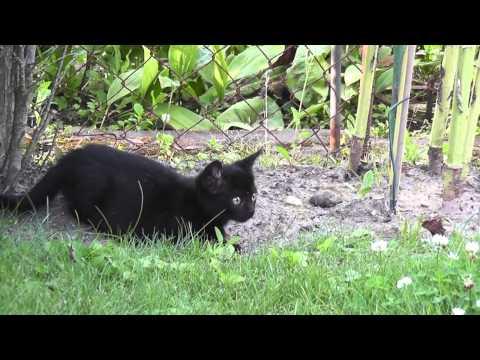 Bolonka Zwetna - Aus meinem Hundeleben: 'Besuch eines Kätzchens' (HD-Video)