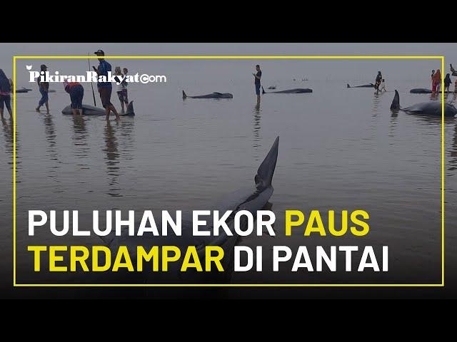 Puluhan Ekor Ikan Paus Mati Usai Terdampar di Pantai Madura, Jawa Timur, Penyebab Belum Diketahui
