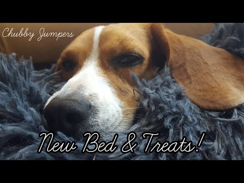 New Treats + New Bed! | Chubby Jumpers