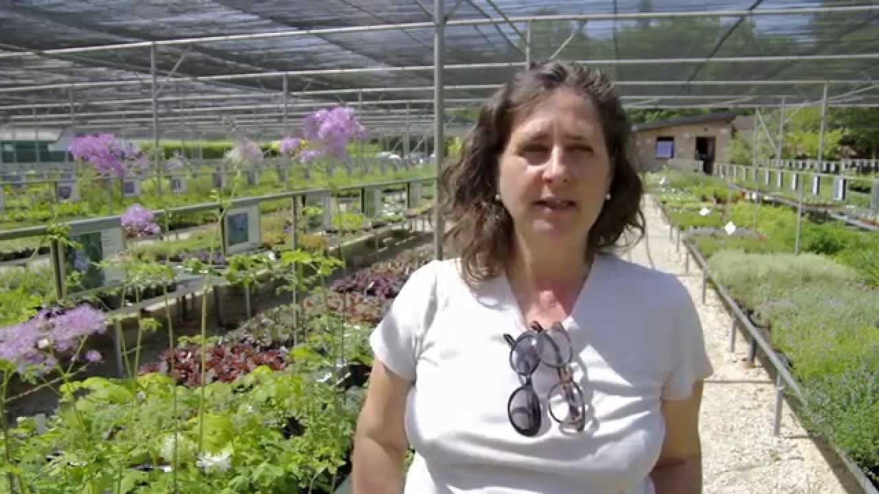 Vivai priola il giardino delle farfalle federica for Progettista giardini