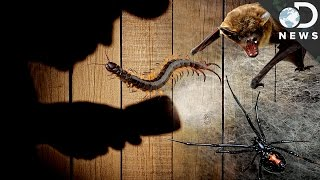 The Most Horrifying Creepy Crawlies That Come Out At Night