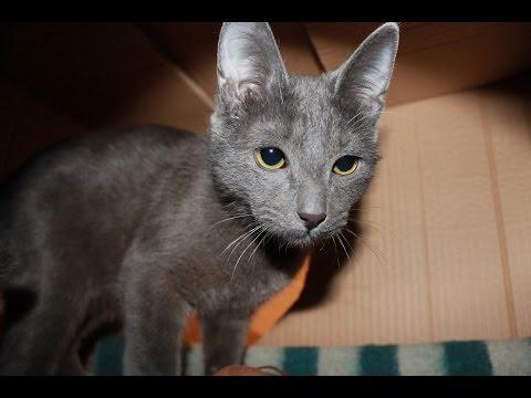 Фото как сделать коту домик