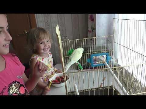 Вопрос: Нужно ли попугаю зеркало?