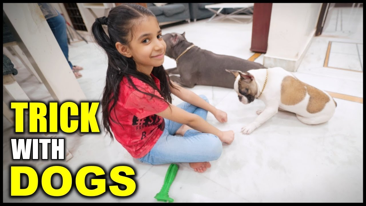 Guneet Playing Tricks with My Dogs Brody Bunny | Funny Family Video | Harpreet SDC