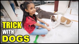 Guneet Playing Tricks with My Dogs Brody Bunny   Funny Family Video   Harpreet SDC