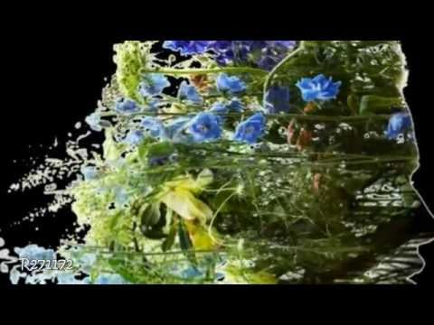 Patrick Watson - Big Bird in a Small Cage   (HD 720p)