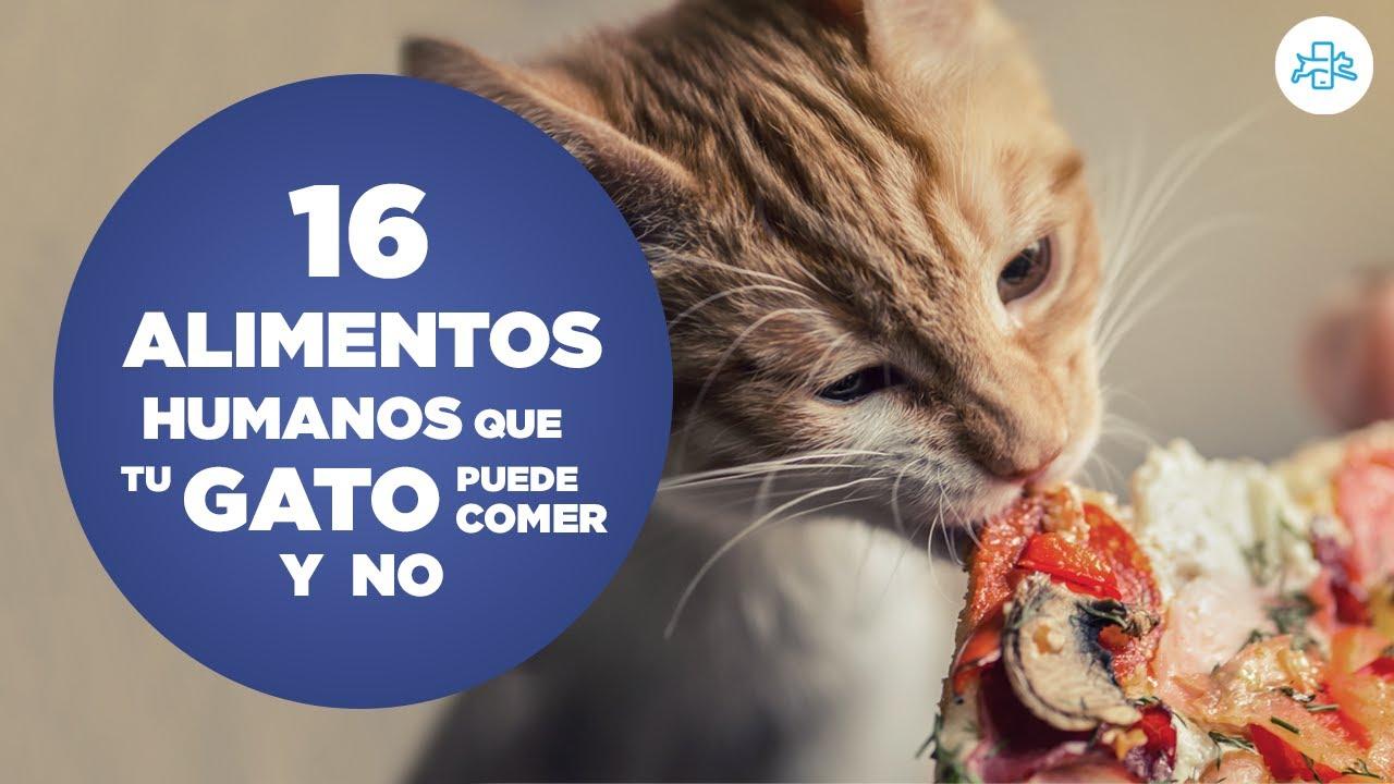 heces malolientes gatos