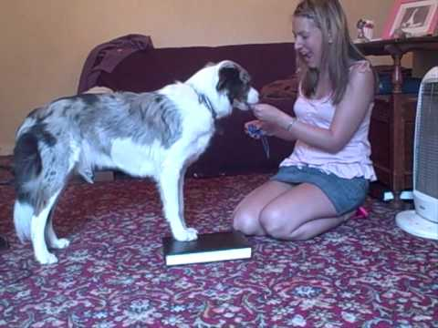 Dog Trick Tutorial - Side Legs Up