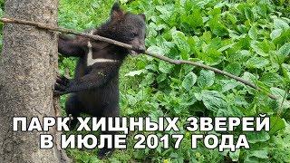 ПАРК ХИЩНЫХ ЗВЕРЕЙ В ИЮЛЕ 2017 ГОДА