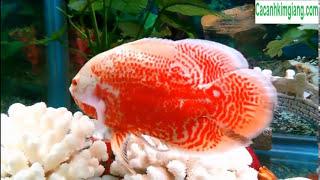 Một số loại cá cảnh rẻ đẹp dễ nuôi và dễ chăm sóc