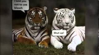Our favorite funny animal pictures and video clips ,funniest scare pranks