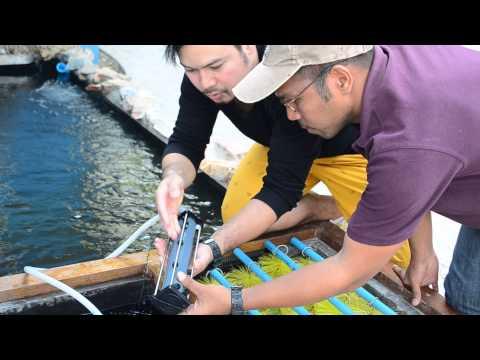 airstone shop พามาชม บ่อปลาคาร์พ ขนาดเล็ก