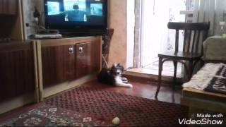 Моя собака дебил
