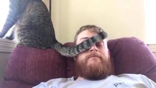 Smieszne Koty 2016