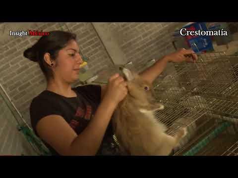Venezuela y el 'Plan Conejo' de Nicolás Maduro