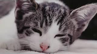바로 잠오는 수면음악 • 잠이 안올때 듣는 음악 • 광고없는 수면음악 • 졸릴때 듣는 수면음악