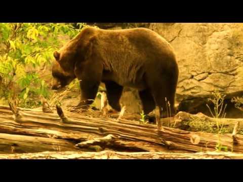PBS NOVA   Wild Ways   New Documentary 2016 HD