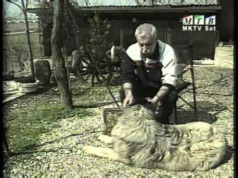 шарпланинец - the ethnic macedonian dog SHARPLANINEC