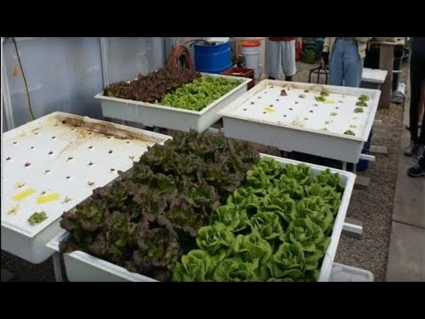 Stacy Tollefson, PhD - My Experience with Organic Hydroponics