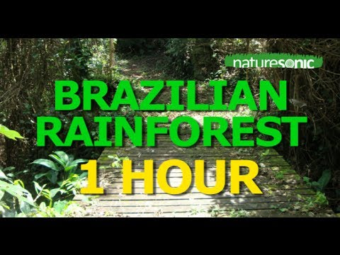 Brazilian Rainforest Sounds - NATURE SOUND AMBIENCE FOR RELAXATION