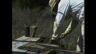 Shaking Bees