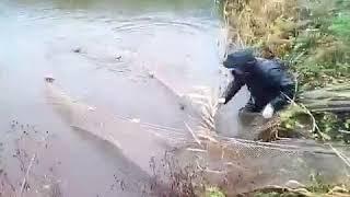 Вылов рыбы бреднем