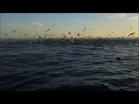 Best of Cape Cod Fishing 2014