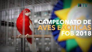 O maior Campeonato de AVES EXÓTICAS do Brasil | FOB 2018