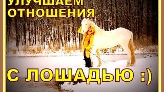 Как улучшить отношения с лошадью при помощи прогулки? Анита Крылова LIBERTY HORSE.