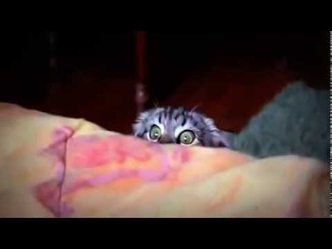 Кот увидел видео