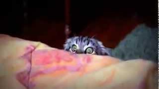 Копия видео Смешной кот увидел что то Сташное