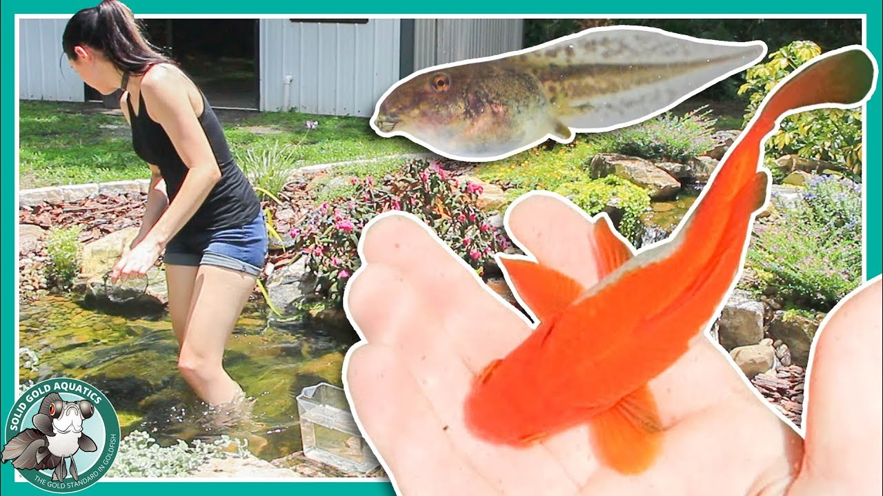 fish-pond-or-frog-pond-pond-updates